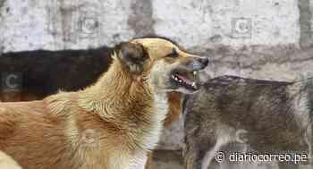 Arequipa: Distrito de Yura en alerta por casos de rabia canina - Diario Correo