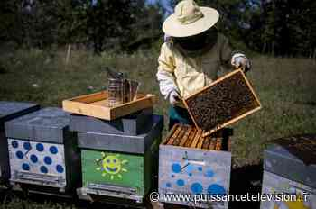 Huit ruches ont été volées à Thonnance-lès-Joinville - Puissance Télévision