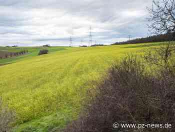 Wiese bei Wiernsheim wird zum Solarpark - Region - Pforzheimer-Zeitung - Pforzheimer Zeitung