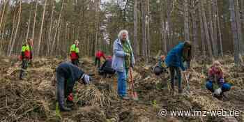 Pflanzaktion bei Coswig: Freiwillige setzen 3000 neue Bäume - Mitteldeutsche Zeitung