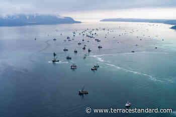 VIDEO: DFO investigates alleged illegal dump of herring in Deep Bay – Terrace Standard - Terrace Standard