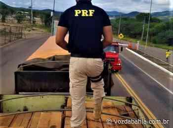 Senhor do Bonfim: PRF apreende madeira nativa do Pará transportada de forma ilegal - Voz da Bahia