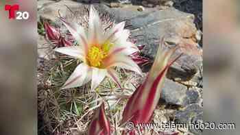 Florece el desierto de Anza Borrego - Telemundo San Diego