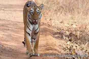 Tiger relocation project: Failure of inter-state tiger relocation explained