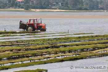 Landes : la consommation d'huîtres du lac d'Hossegor est à nouveau autorisée - Sud Ouest