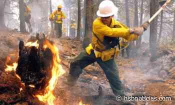 Voraz incendio consumió varias hectáreas de vegetación en zona rural de Soatá | HSB Noticias - HSB Noticias