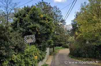 Villennes-sur-Seine : macabre découverte sur le chemin de la côte - Le Parisien