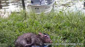 Ambiental flagra caça ilegal em Iguape - Adilson Cabral