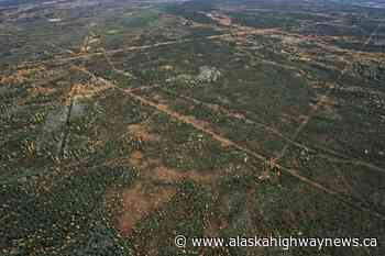 Fort Nelson First Nation getting help for caribou restoration, wildfire protection efforts - Alaska Highway News