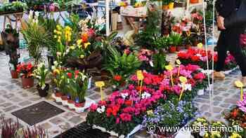 Porto San Giorgio, Domenica delle Palme: sospeso ogni genere di mercato - Vivere Fermo