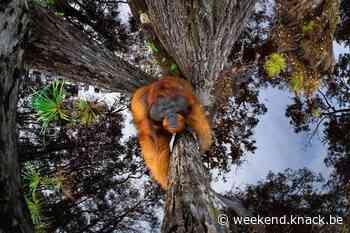 Deze knappe foto's winnen dit jaar de World Nature Photography Awards