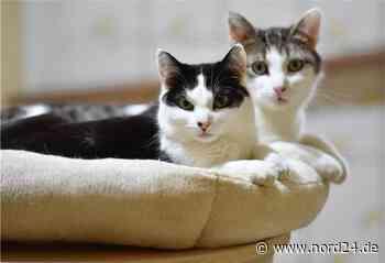 Vergiftet: Katzenfreunde in Sittensen in Sorge - Nord24