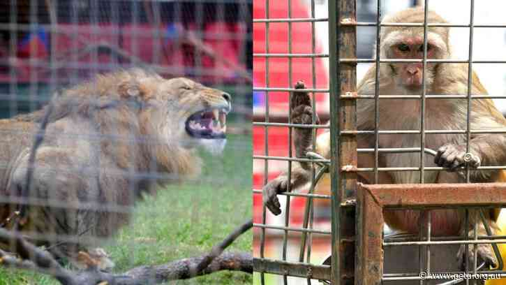 HUGE NEWS! The Show Won't Go On for Exotic Animals in Australian Circuses!