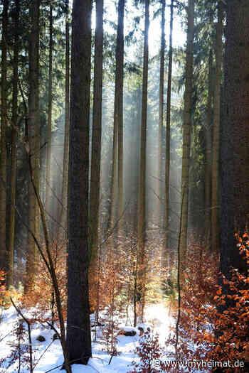 Im Zauberwald - Annaberg-Buchholz - myheimat.de - myheimat.de