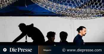 Zlatan Ibrahimovic, der gottgleiche Elefant in Schwedens Kabine - Die Presse