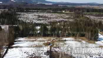 Ohlstadt/Bayern: Forstamt greift wegen Holzeinschlags ein - Merkur Online