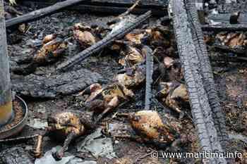 Gignac : 120 poules cruellement brûlées dans leur poulailler - Gignac la Nerthe - Faits divers - Maritima.info