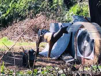 Turate, gli animalisti contro l'area di tiro con l'arco con le sagome degli animali - Prima Saronno