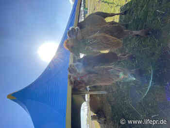 Tierisch gut - Circus Maximum organisiert Safariland am Niederrhein - lifePR