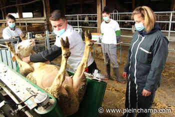 09/02/2021 Saint-Flour accueille les Ovinpiades - Pleinchamp