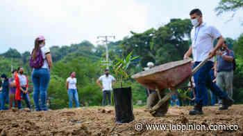 Conmemoran Día Mundial del Agua sembrando guaduas en Cúcuta | La Opinión - La Opinión Cúcuta