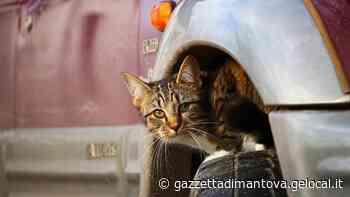 Gattino nel motore salvato dai vigili del fuoco a Castiglione delle Stiviere - La Gazzetta di Mantova
