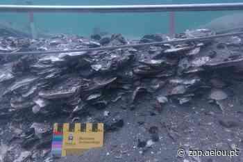 Depósitos de conchas desvendam a história oculta de paisagens submersas na América do Norte e Europa - ZAP