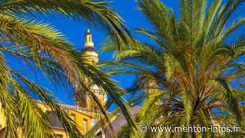 Traitements pour les platanes et palmiers de la ville - Menton Infos