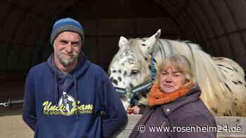 """Darum sucht die """"Lucky Horse Ranch"""" aus Stephanskirchen neue Heimat - rosenheim24.de"""