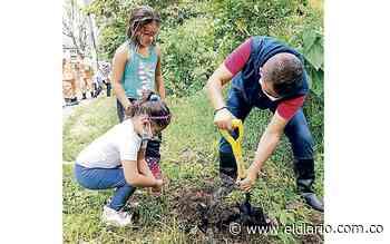 Dosquebradas será el bosque de los guayacanes amarillos - El Diario de Otún