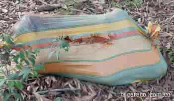 Hallan cuerpo desmembrado de una mujer en Tierralta, Córdoba - Caracol Radio