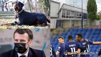 Nourrisson mordu par un chien, inquiétude au lycée de Drancy, victoire des Bleus : les 5 infos à retenir du we - LaDepeche.fr
