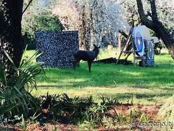 Turate, sagome di Bambi e di un cinghiale al parco arcieri: protestano gli animalisti - ilSaronno