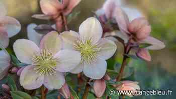Les conseils de jardinage de la saison avec Gertrude Schneider - Die Gartentipps mit Gertrude Schneider - France Bleu
