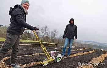 Landwirtschaft im Wandel: Ein Gemüsefeld zum Mitmachen - Passauer Neue Presse