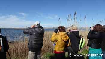 Agde : au Bagnas, l'accueil du public est au centre d'un projet global - Midi Libre