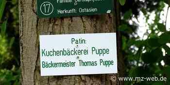 Pate für Bäume in Zeitz - Renaturierung für die Stadt - Mitteldeutsche Zeitung