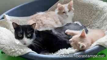 Arluno, trovati in un campo i corpi di sette gatti morti - L'Altomilanese - Libera Stampa
