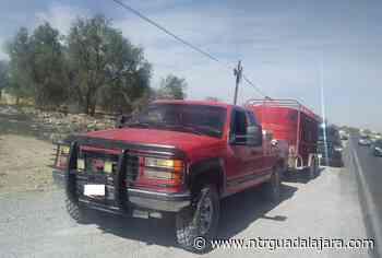 Decomisan ganado en Lagos de Moreno - NTR Guadalajara