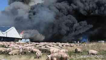 18 Ställe in Flammen: Tausende Schweine verenden bei Großbrand