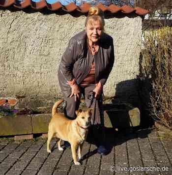 1200 Euro für kranken Harzburger Hund Amira - GZ Live