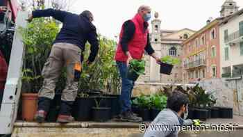 Des plants offerts par la Ville de Menton pour refleurir Breil-sur-Roya - Menton Infos