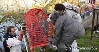 Villeneuve-Saint-Georges: 10 tonnes de déchets ramassés en bord de Seine et Yerres - 94 Citoyens