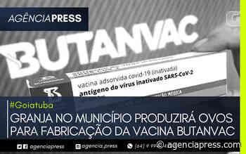 #Goiatuba   GRANJA NO MUNICÍPIO PRODUZIRÁ OVOS PARA VACINA BUTANVAC - agenciapress
