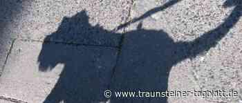 Seeon-Seebruck: Mit Luftgewehr auf Hund geschossen - Traunsteiner Tagblatt