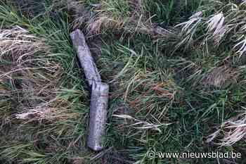 """Afval en steenpuin achtergelaten in natuurgebied: """"Dit is geen simpel sluikstort, dit is gevaarlijk"""""""