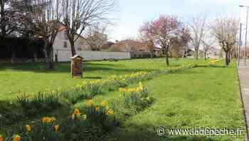 Portet-sur-Garonne. Des espaces verts parsemés de fleurs mellifères - ladepeche.fr