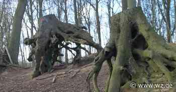 Bäume auf dem Horbes Bergske in Grefrath-Mülhausen gefällt - Westdeutsche Zeitung