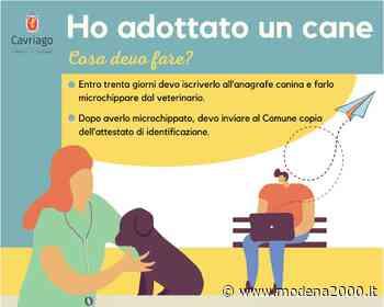 Cavriago: una campagna di comunicazione per il benessere di cani e gatti - Modena 2000