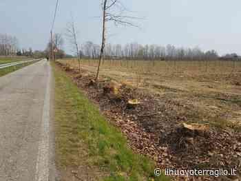 LIPU Venezia. Segnalazione abbattimento alberi a Favaro veneto - Il Nuovo Terraglio